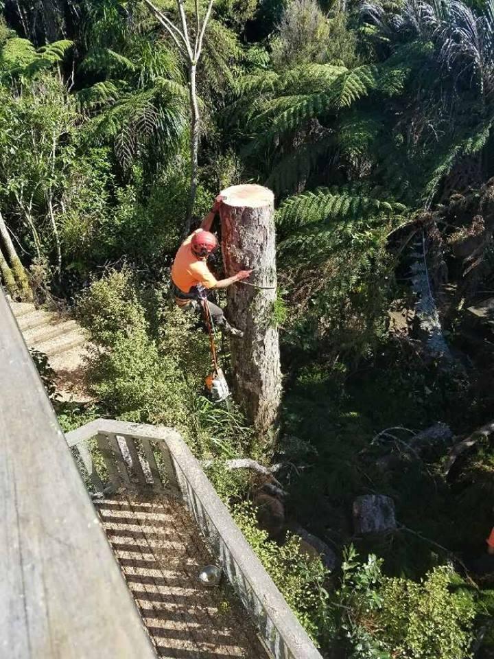 Tree felling Auckland region-Waitakere