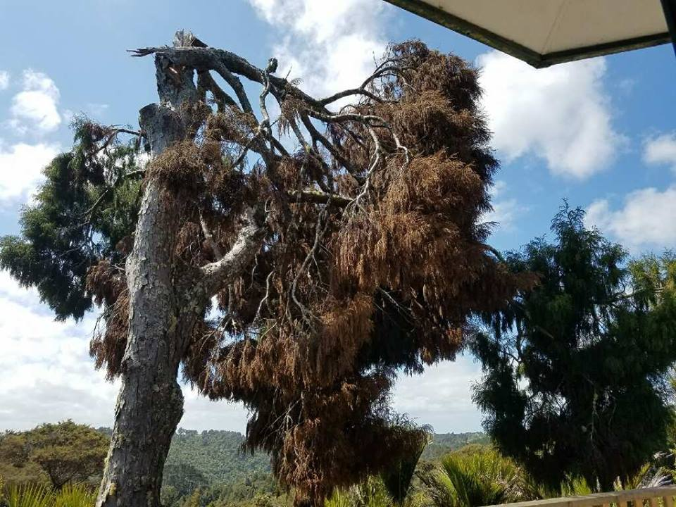 Arborists Auckland, Tree Felling, Tree Removal, Mulching,Hedge Trimming, Branch Pruning, Stump Grinding, Mulching Waitakere and Auckland Region.Auckland for Tree Felling, Tree Removal, Mulching,Hedge Trimming, Branch Pruning, Stump Grinding, Mulching