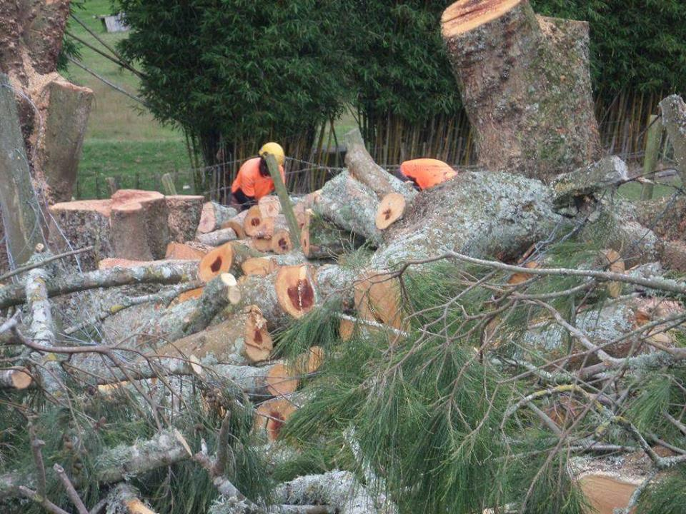 Tree Felling, Tree Removal, Mulching,Hedge Trimming, Branch Pruning, Stump Grinding, Mulching Waitakere and Auckland Region.Auckland for Tree Felling, Tree Removal, Mulching,Hedge Trimming, Branch Pruning, Stump Grinding, Mulching Waitakere