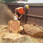 Tree Removal and Tree Felling Zen Arbor Care in Waitakere and the Auckland Region