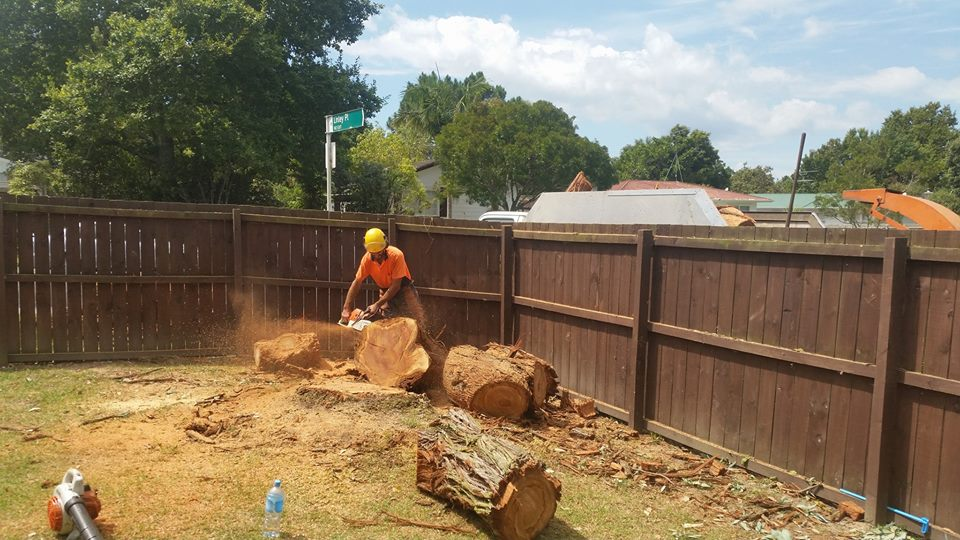 Tree Removal Tree Felling Zen Arbor Care in Waitakere and the Auckland Region