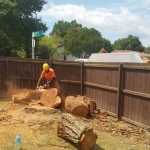 Arborists Auckland and Waitakere Tree Felling, Tree Removal, Hedge Trimming, Branch Pruning, Stump Grinding, and Mulching.
