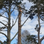 Tree Removal Zen Arbor Care Waitakere