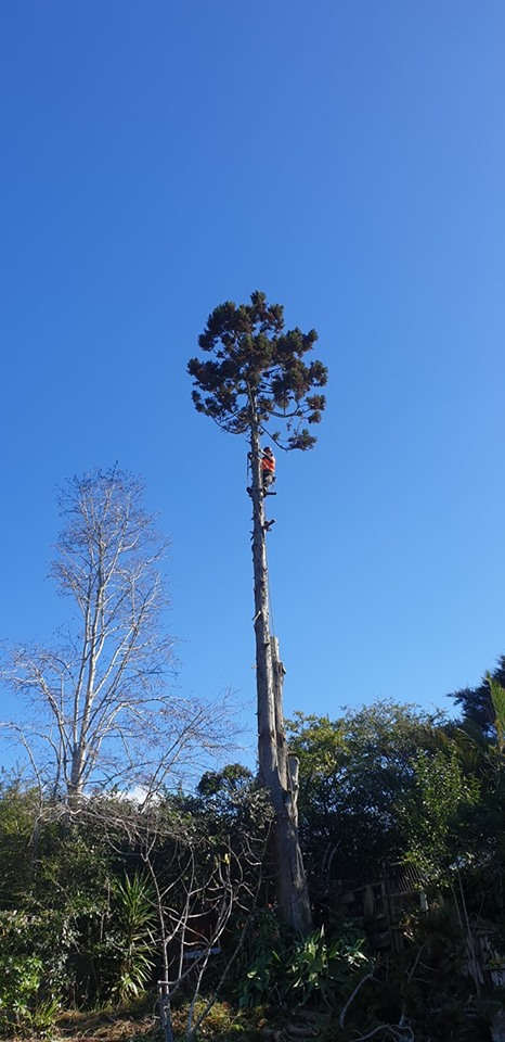 Tree Removal Tree Felling Zen Arbor Care Waitakere and the Auckland Region
