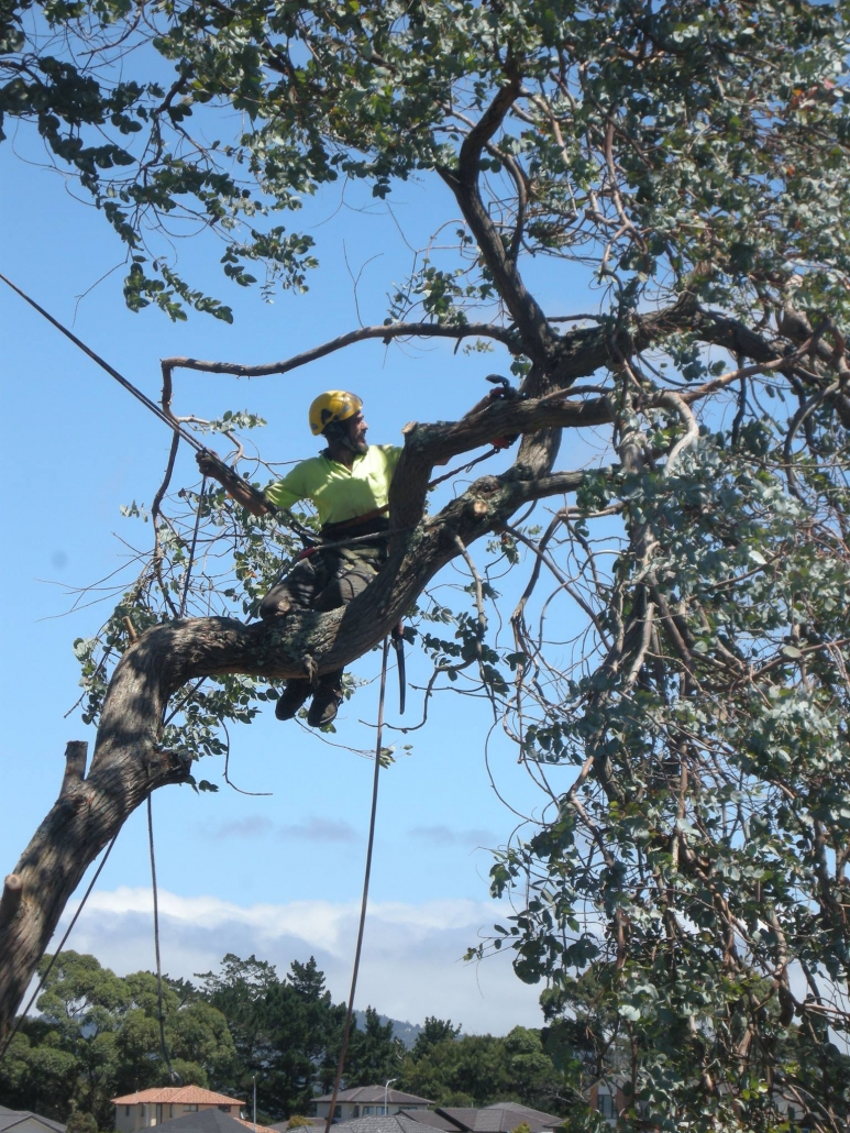 Tree Felling, Tree Removal, Hedge Trimming, Branch Pruning, Stump Grinding, Mulching, Waitakere and Auckland Region.