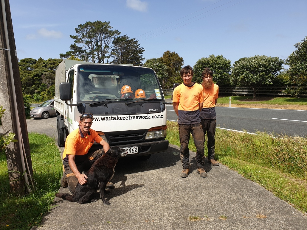 Arborists Auckland Tree Felling, Tree Removal, Hedge Trimming, Branch Pruning, Stump Grinding, Mulching Waitakere and Auckland Region.
