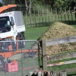Arborists Auckland Tree Felling, Tree Removal, Mulching, Hedge Trimming, Branch Pruning, Stump Grinding, Mulching Waitakere and Auckland Region.