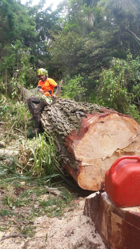 Auckland's leading tree removal specialists. Operating in the Waitakere, Auckland region