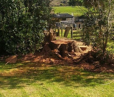 Tree Felling Waitakere and Auckland
