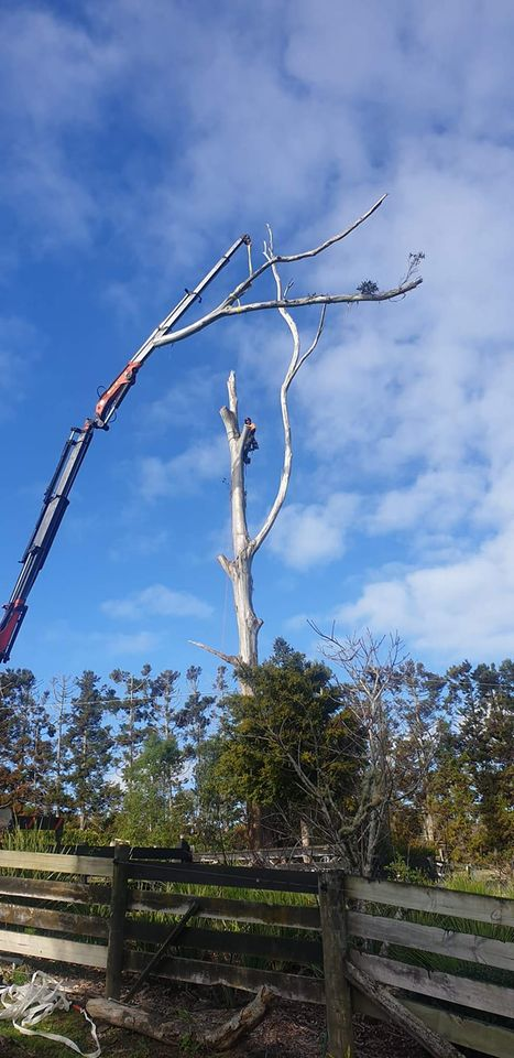 Tree removal specialists. Waitakere, and through out the Auckland region.