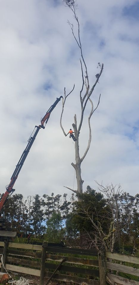 Tree removal specialists. Waitakere, Auckland region.