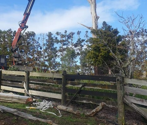 Tree removal specialists Waitakere, and through out the Auckland region NZ.