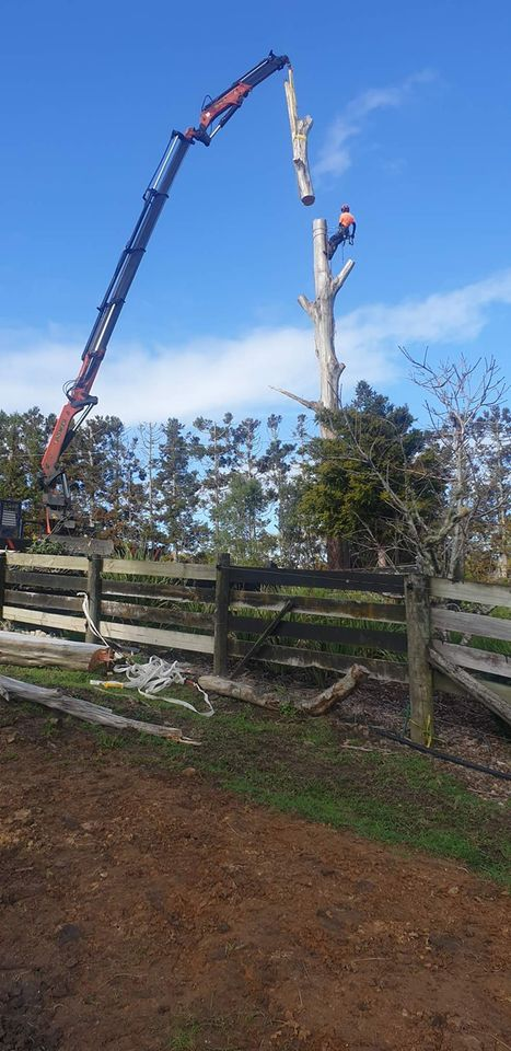 Tree removal specialists. Through out Waitakere and the Auckland region.