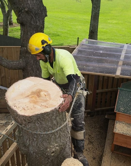 Tree Work Waitakere Auckland Area. Auckland's tree removal specialists. Operating in the Waitakere, Auckland region
