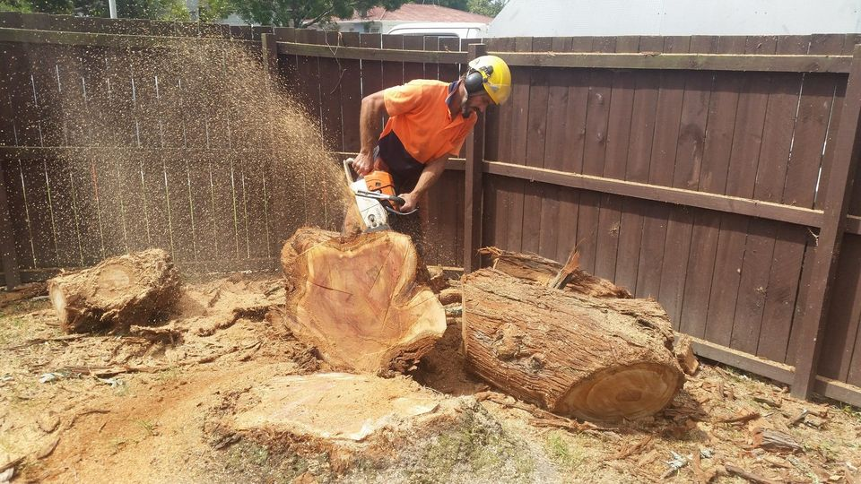 Tree removal, in Waitakere, and through out the Auckland region