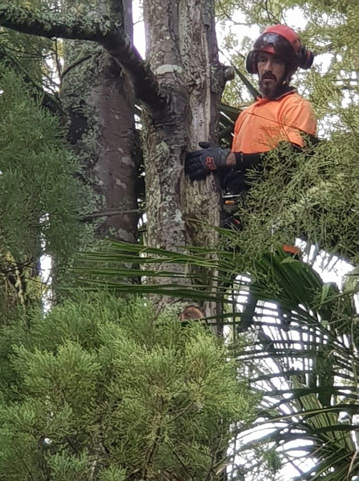 For all tree pruning, removal, felling, hedge trimming, stump removal, mulching and chipping, this crew is here to do the job efficiently, safely, cost-effectively, and tidily with zero stress and minimal risk.