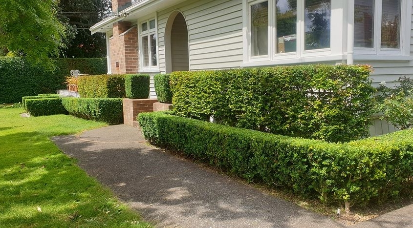 Hedge Work Waitakere and the Auckland region..