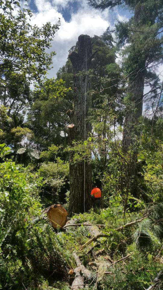 Auckland's leading tree removal specialists. Operating in Waitakere and covering the Auckland region