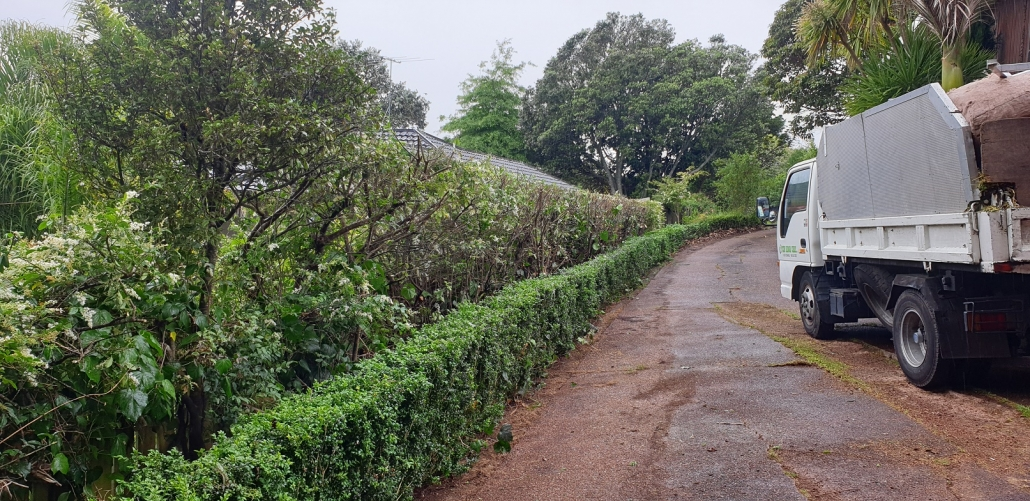 Hedge Work Waitakere Auckland Region. Call Zen Arbor Care for all Hedge work.