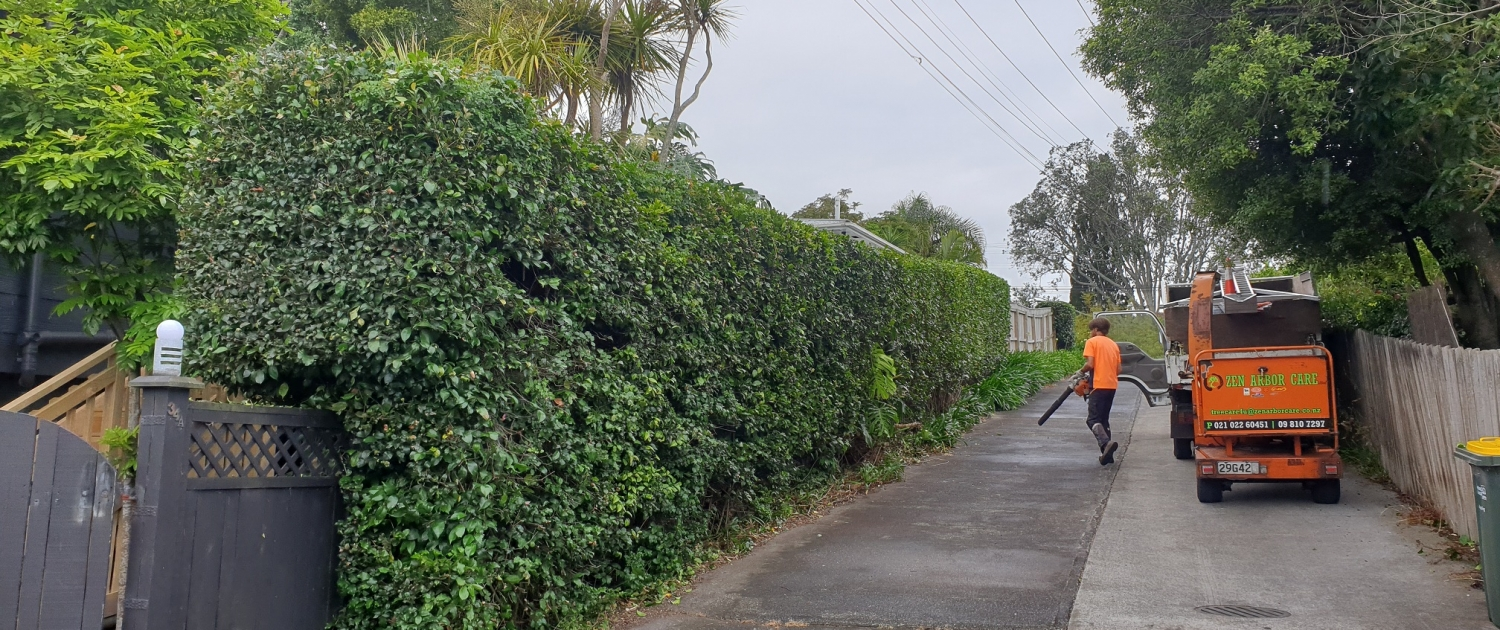 Hedge Work Waitakere Auckland. Zen Arbor Care for all Hedge work.